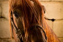 Horses...my favorite animal / by Deborah Volpe