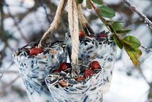 Birds / To attract birds in garden