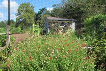 Green Spring Gardens / Fabulous public garden in Alexandria, VA.  See more at: www.dcgardens.com/green-spring.