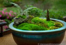 Moss / Gardening small and large
