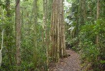 Forest walks/ride