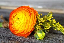 Green&Yellow&Orange