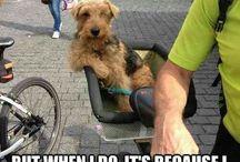 Funny stuff ❤