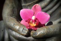 Zen & Tranquility