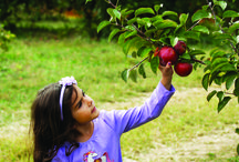 Fall Fun / From apple picking to spooky adventures, there is so much to do in the fall.