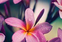 그릴것-꽃
