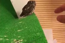 Baby Owls! / You Had No Idea That You Loved Baby Owls Until This Very Moment