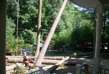 Rigby's Expert Tree Care / by Rigby's Expert Tree Care- The Original Roswell Tree Service LLC