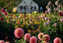 Country style garden