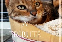 """Animals - petsit - blog it / It's just not """"another pet"""".  Each one has special memories attached to them."""