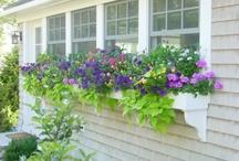 My someday yard!!! / by Amy Vassale