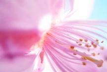 Flowers / @--}--}--- / by Mareeeeah