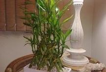 Lucky bambú