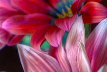 Daisies / by Amanda Kupiec