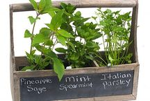 Fresh Herbs / Fresh is best, especially with herbs. You don't even need a garden to grow your own - just a windowsill!