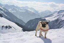 Tipps für die Reise mit Hund / Reisetipps für Hundehalter