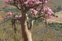 Socotra Dream Tours&Travels