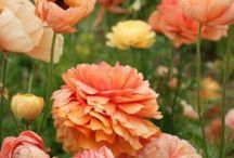 Keltaisia ja oransseja kukkia / Kukkia