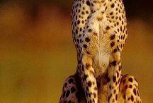 ANIMAUX / Contempler la beauté de la nature et des animaux qui l'habite...