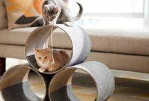 Nápady, návody, tipy DIY cats