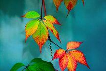 осень-не надо!!1