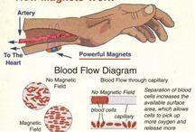 Magnetix Wellness korut