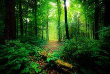 National parks of Kerala / kerala has a lots of National parks