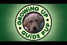 GUGP - Pilaf Vids / Web Season Starring Pilaf the Guide Dog Puppy