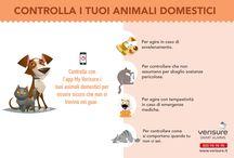 Con l'app My verisure controlla i tuoi animali domestici