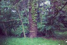 My Neighboring Nature