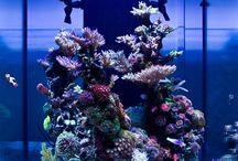 Reef aquarium / Saltwater tanks and my own tank.