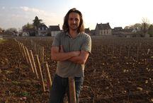 Domaine Philippe Bouzereau fils / Avec près de 18 hectares de vignes classées en Appellation d'Origine Contrôlée, le domaine Philippe Bouzereau s'étend sur 5 villages de production. Il se situe en plein coeur du village de Meursault, au pied de l'église et des vignes du vieux clos du Château de Cîteaux.
