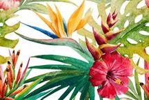 Bunga tropis