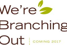 We're Branching Out at Doubletree Orlando SeaWorld