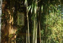 Balcony bamboo