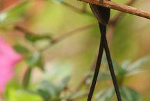 Hummingbirds / Little & fusty bird