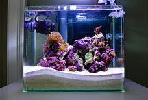 Reef Tanks