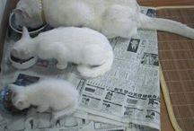 i love kittys