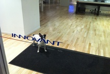 """Libby the Dog @ Innovant / This office celebrity has become our unofficial mascot. See if you can play a """"Where's Waldo"""" style game in search of Libby around the showroom."""