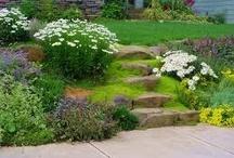 Yard and Garden / by Sue Wells