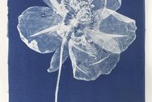 Henrietta Molinaro Cyanotypes / Cyanotypes at Wilson Stephens & Jones