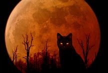 Bad Moon Rising / by Michele R