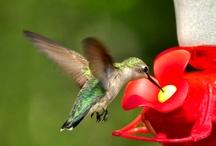 birds / by Cathy Boyd Barber