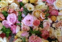 Roses / Some of our favorite, most fragrant smelling roses.