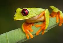 Frogs y Ranas