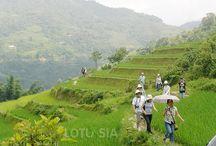 Sapa trekking Vietnam / 0
