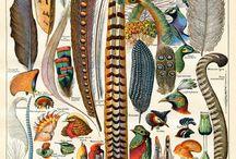 bird feathers art peří