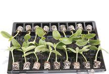 moestuin planten / Mooie en lekkere groente en moestuin planten of kruiden