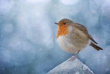 Seasons // Winter Loveliness / Everything #winter!