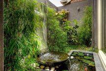 petit jardin entre murs